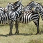 1 Day Tanzania safari in Selous Game Reserve