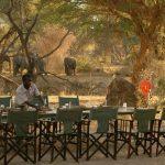 Ruaha Safaris in Tanzania