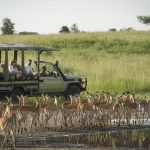 Safari in Serengeti