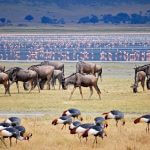 Lake Manyara Wildlife Safari