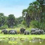 Selous 1 day Safaris