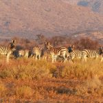 South Tanzania Safaris